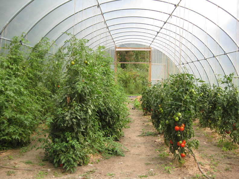 greenhouse cunningham hill farm 39 s blog page 2